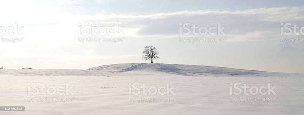 One tree in the middle of a snow field stock photo