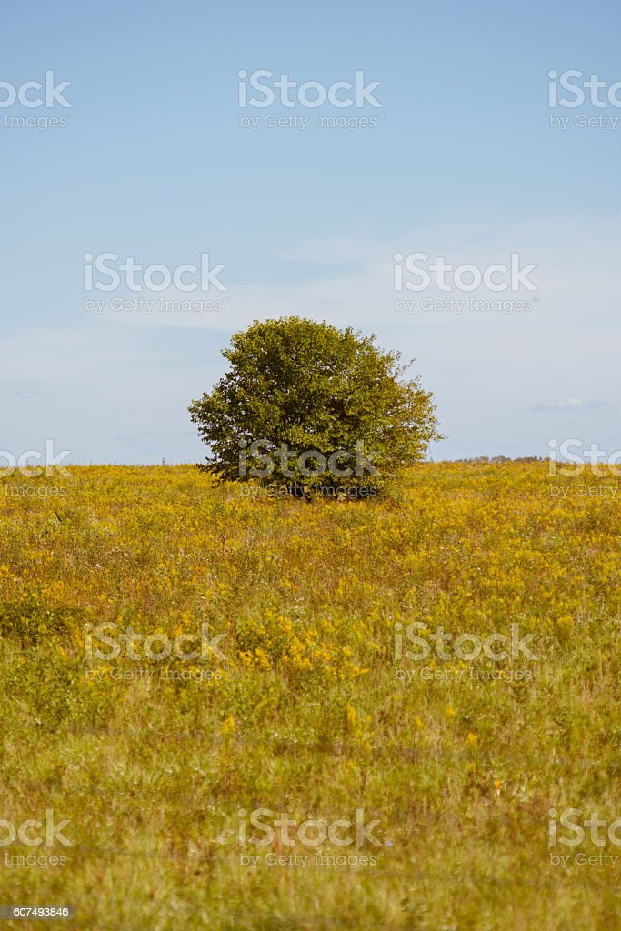One Tree Meadow stock photo