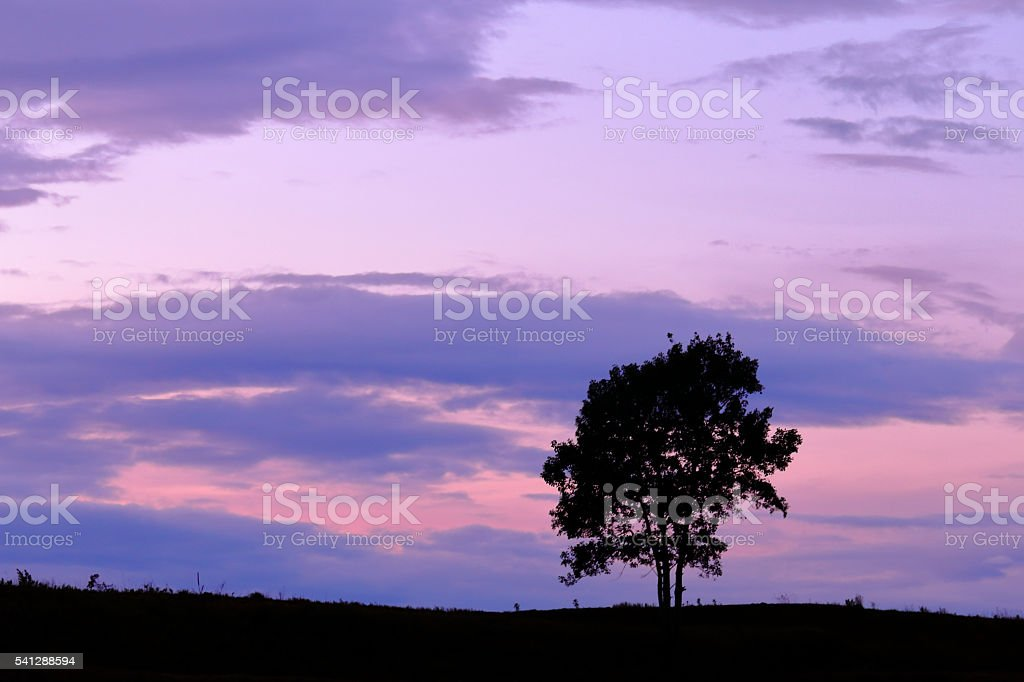 One tree of the evening nearly of summer solstice stock photo