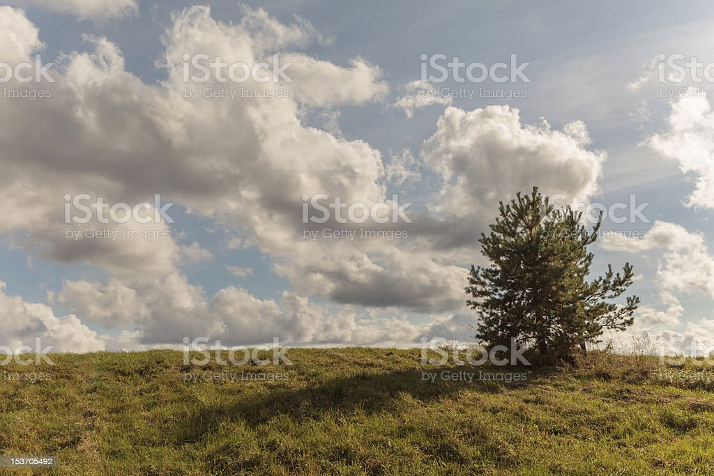 One tree on an autumn oblique field royalty-free stock photo