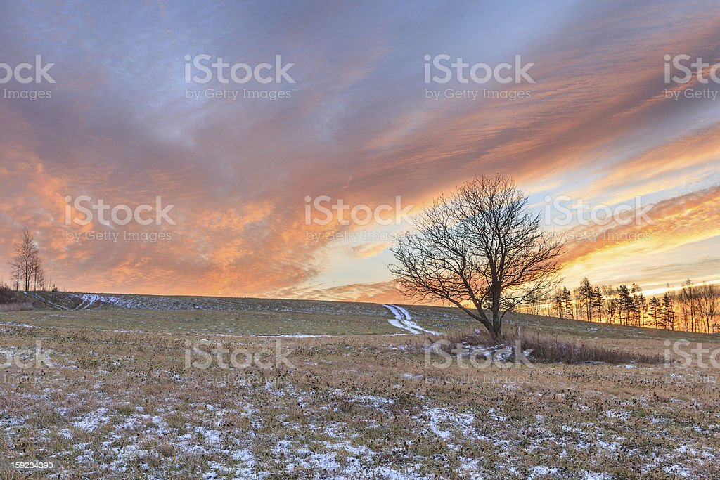 One tree on an autumn snow field. royalty-free stock photo