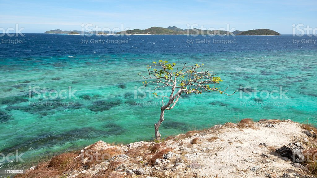 one tree on cliff over ocean royalty-free stock photo