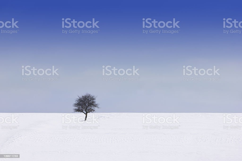 one tree on the snow field stock photo