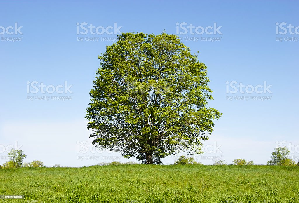 One Tree royalty-free stock photo