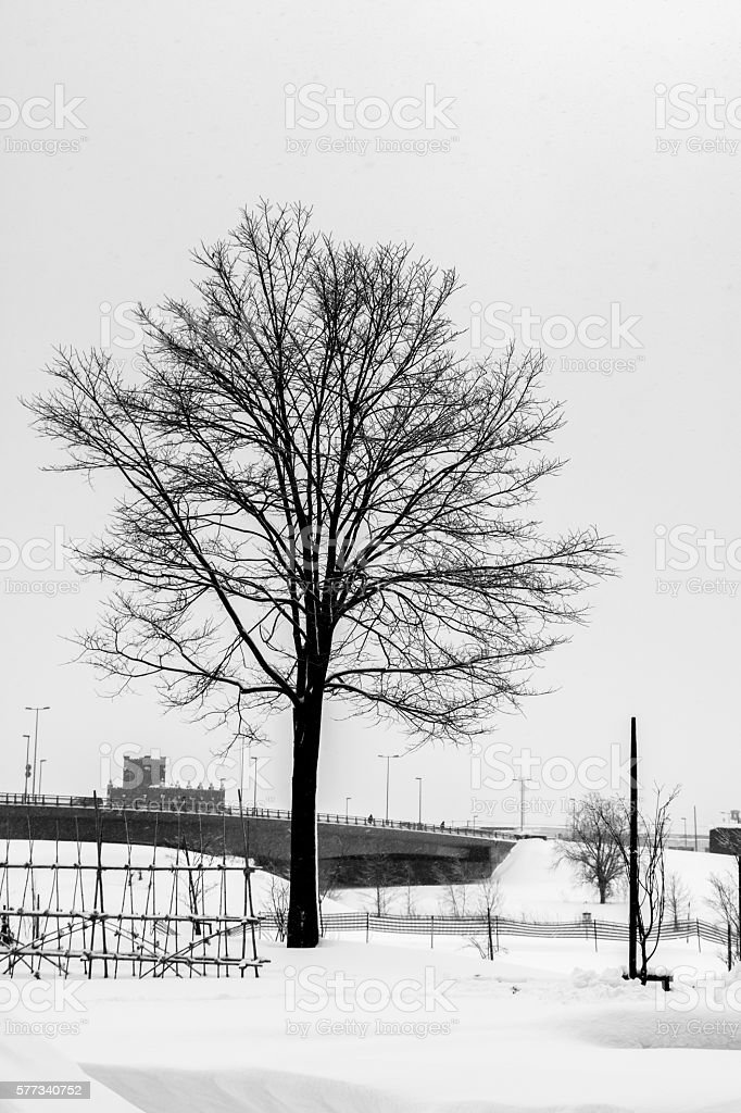 one Tree silhouette among snow rual landscape. stock photo
