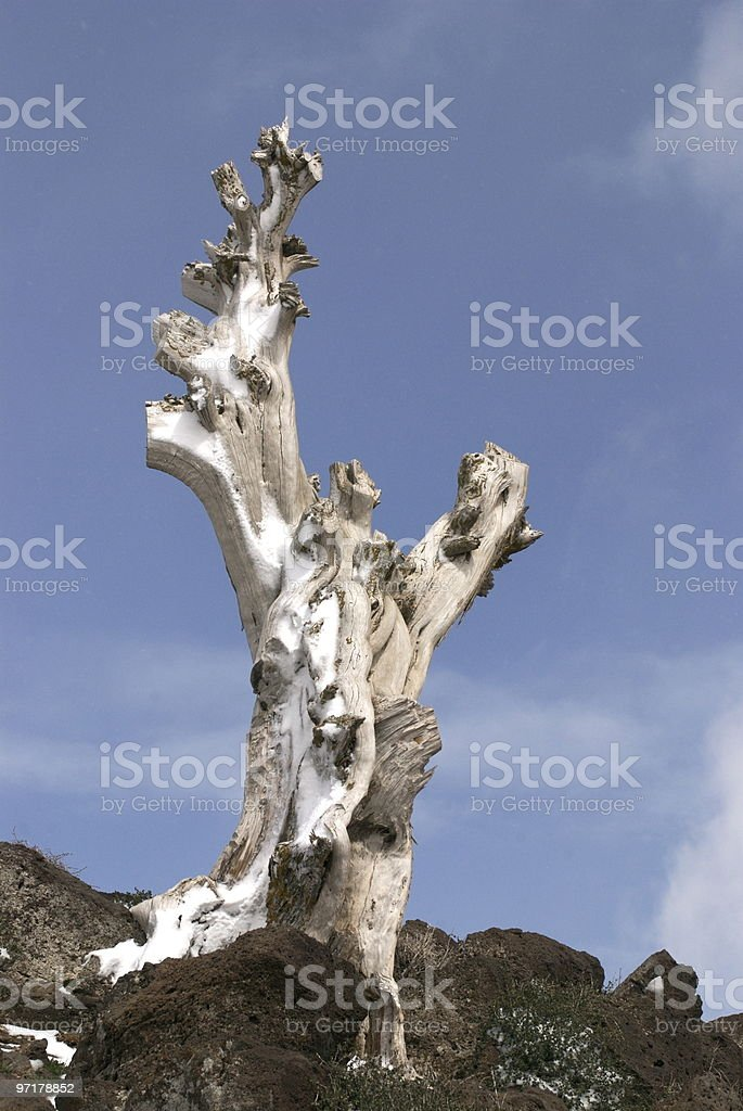 One tree standing stock photo