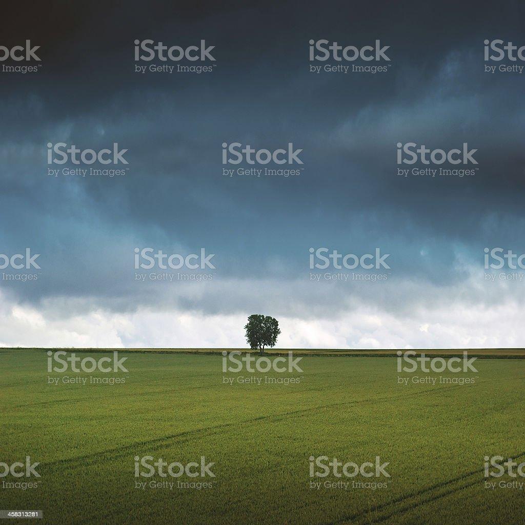 One Tree Under Dark Sky royalty-free stock photo