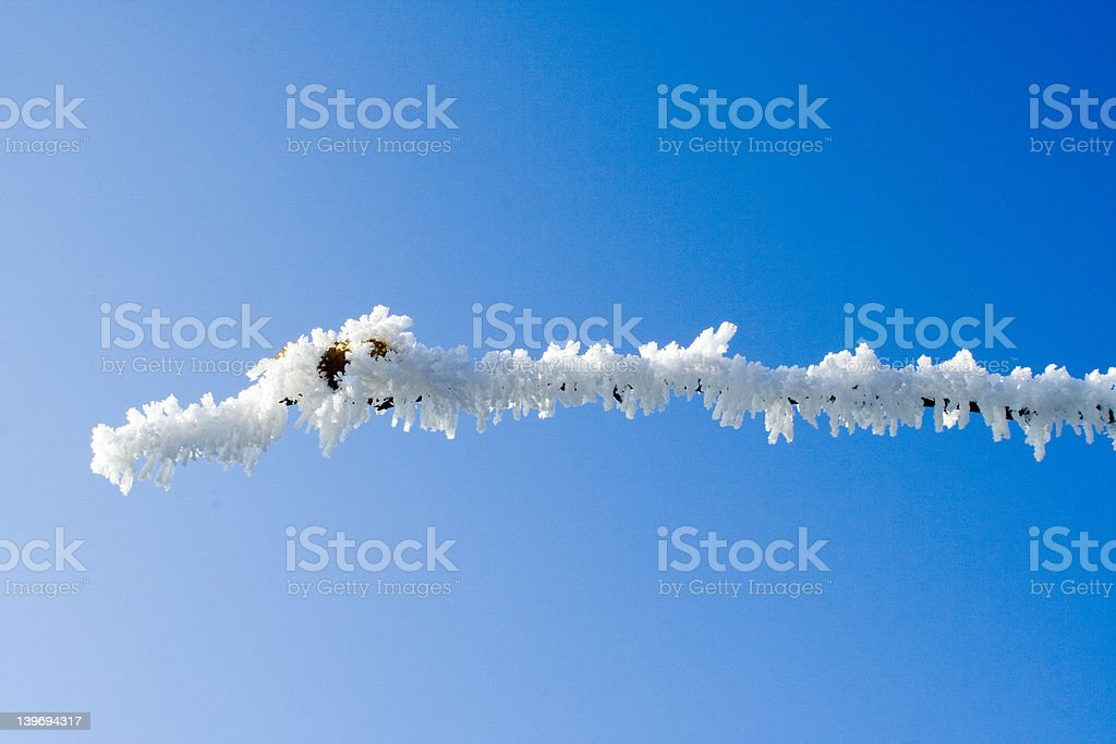 One twig with hoarsefrost stock photo
