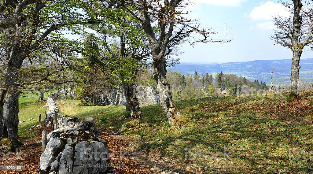 One typical trail in the Jura stock photo