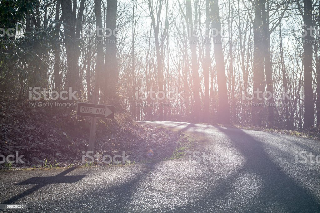 One way road sign in forest in late afternoon light stock photo