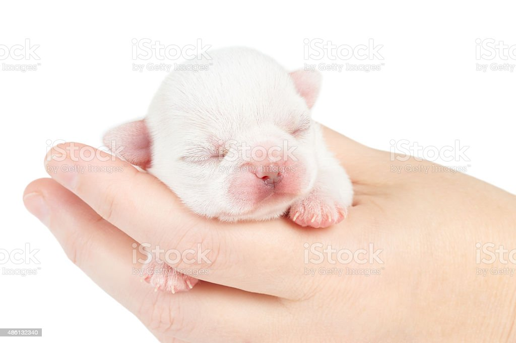 One week old puppy stock photo