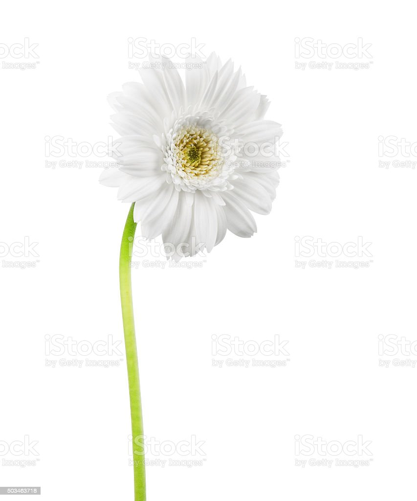 One white flower stock photo