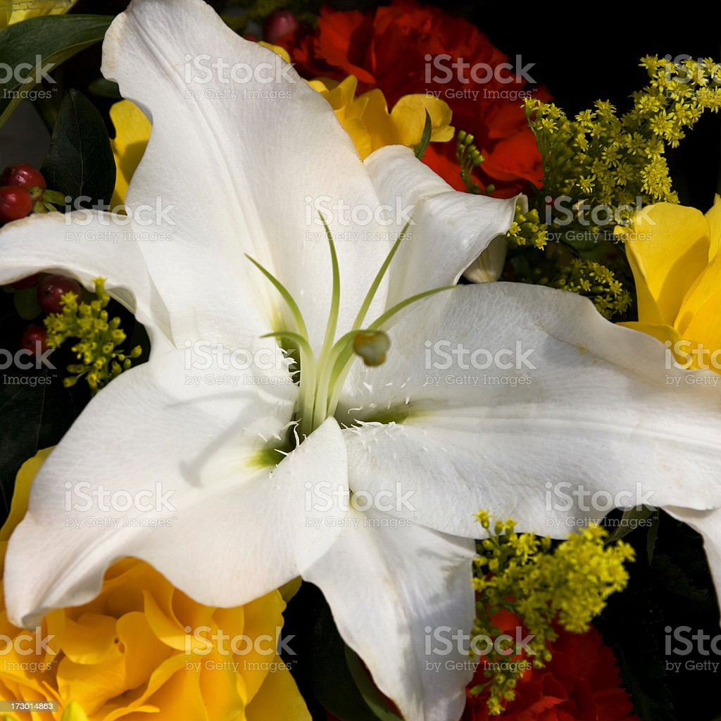 One white lily royalty-free stock photo