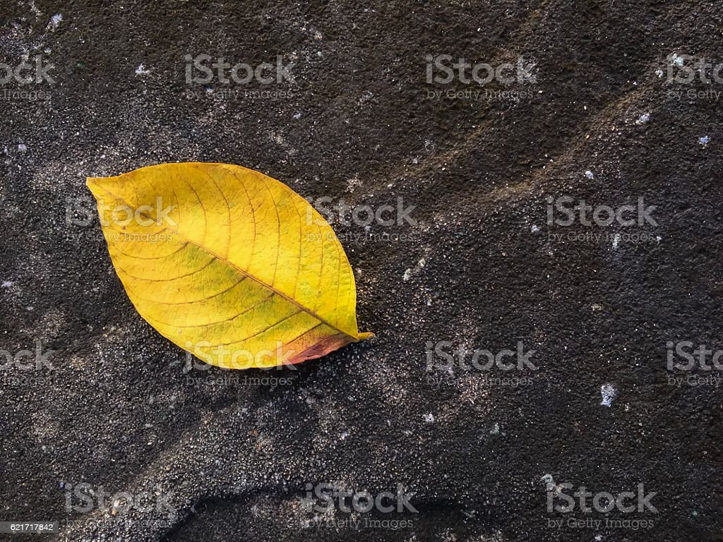 One yellow dry leaf fallen on the floor royalty-free stock photo