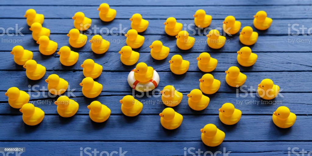 One yellow rubber duck on a safety inflatable life ring as other yellow rubber ducks move in the same direction around the duck on the life ring, on a blue wooden table background. stock photo