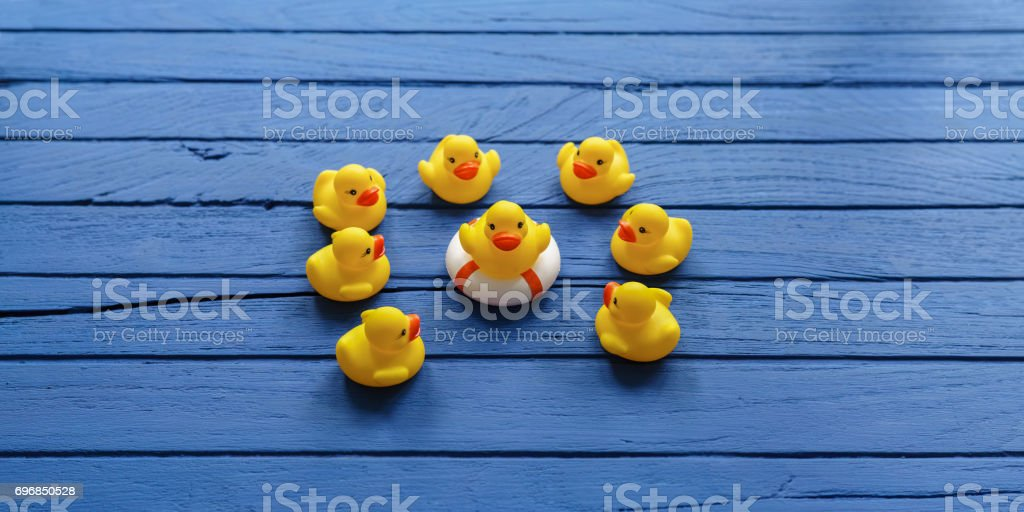 One yellow rubber duck on a safety inflatable life ring facing the camera as other yellow rubber ducks gather around and look at the duck on the life ring, on a blue wooden table background. stock photo