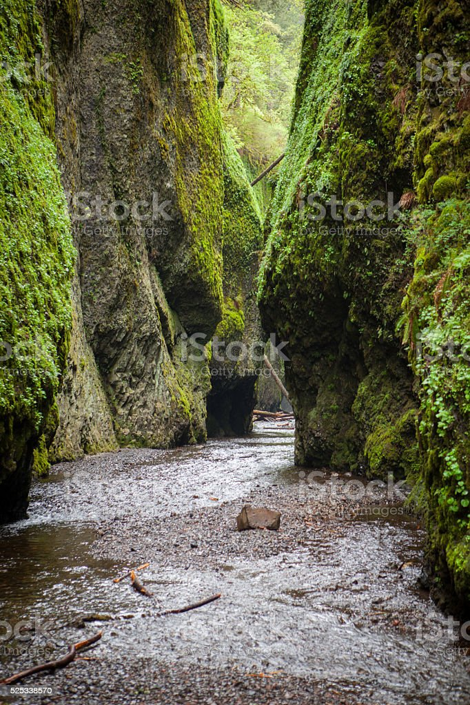 Oneonta Gorge along the Columbia River in Oregon. stock photo
