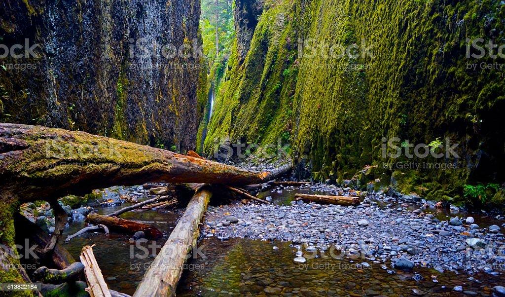 Oneonta Gorge Timber stock photo