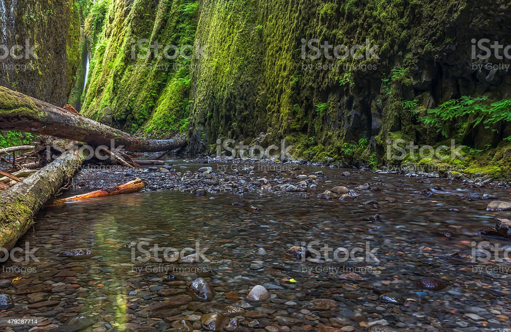 Oneonta gorge trail in Columbia river gorge, Oregon. stock photo