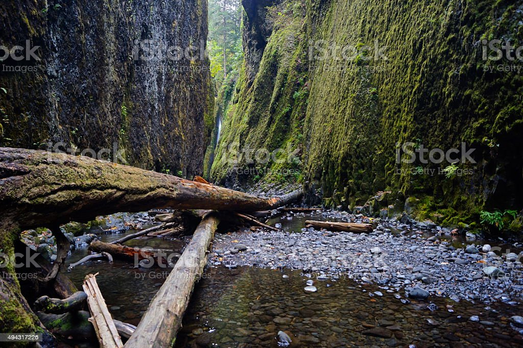 Oneonta Gorge View stock photo