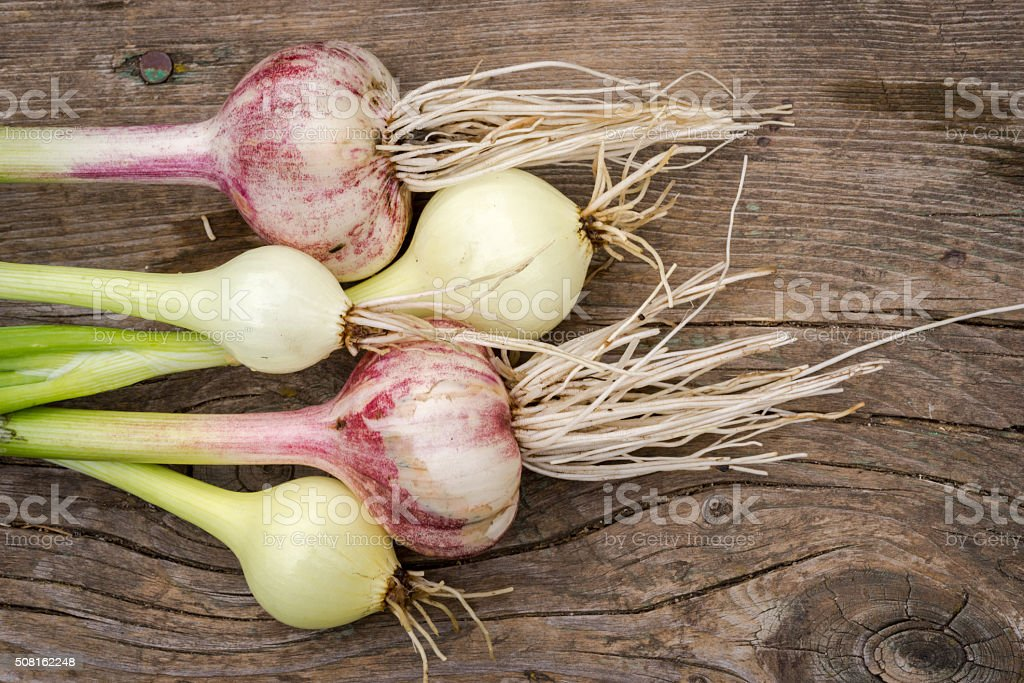 onion and garlic on wood background stock photo