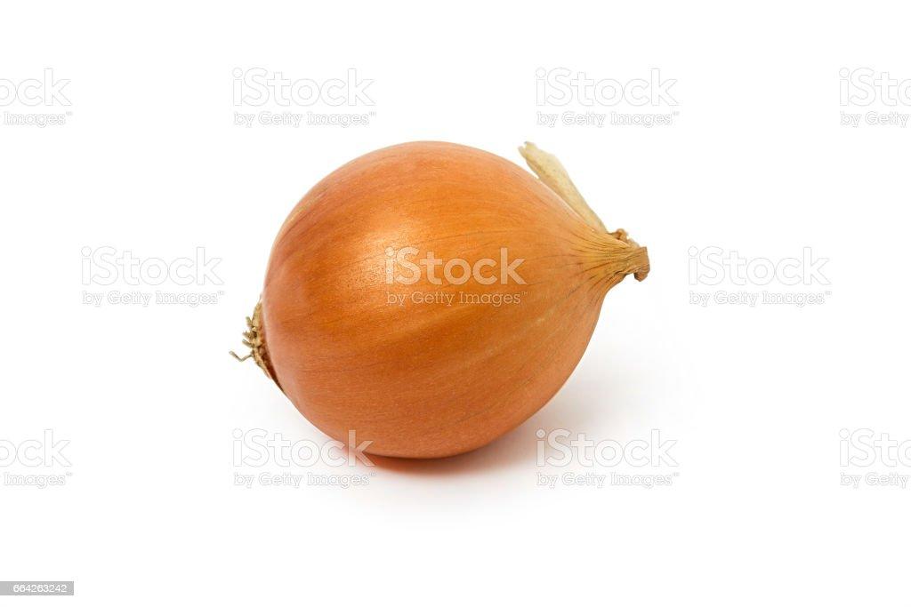 Onion on a white background stock photo