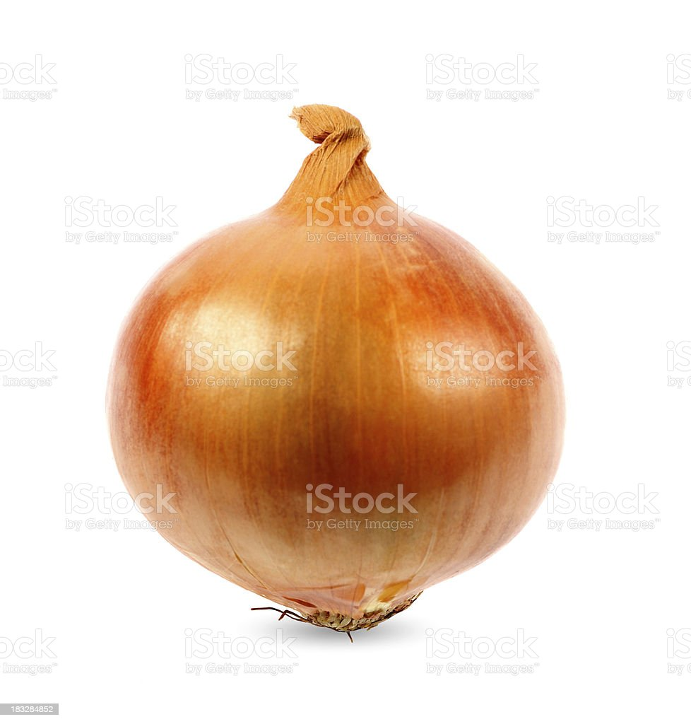 Onion on White Background stock photo
