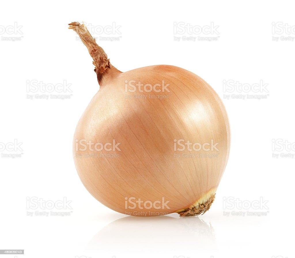 Onion on White Background stock photo