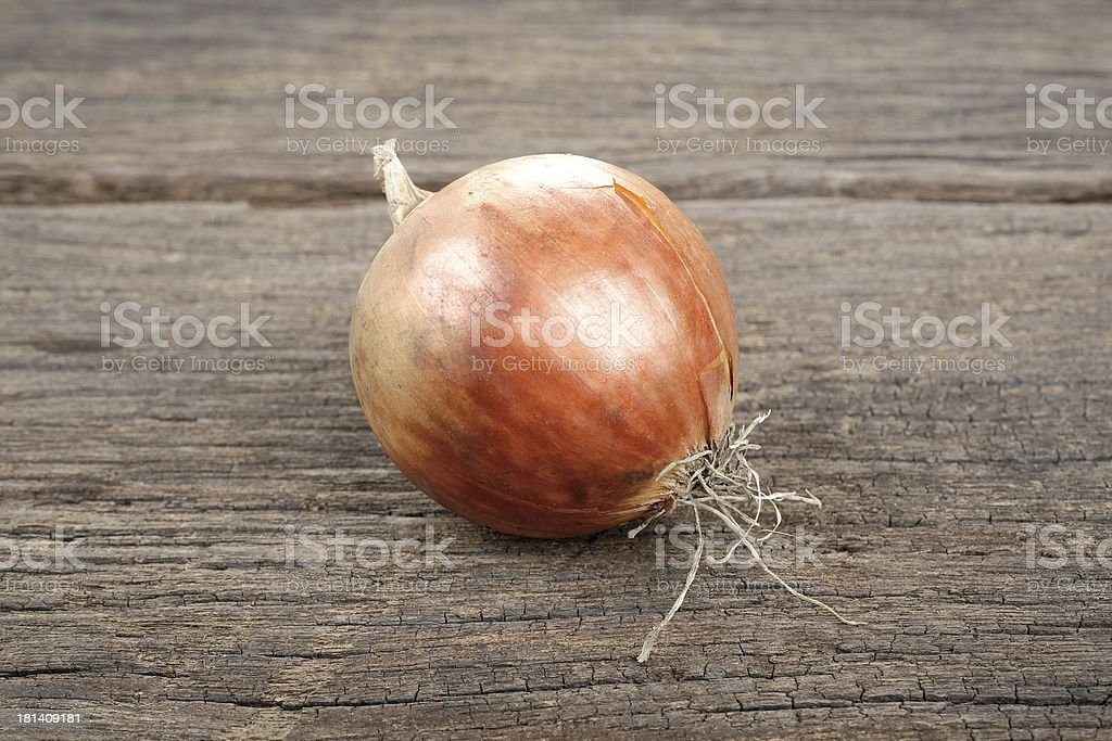 onion royalty-free stock photo