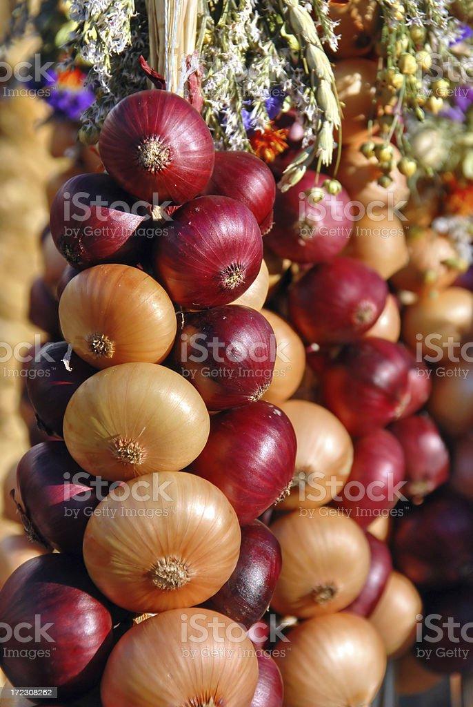 Onion plait royalty-free stock photo
