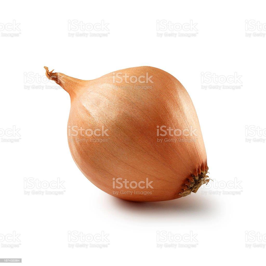 Onion single royalty-free stock photo