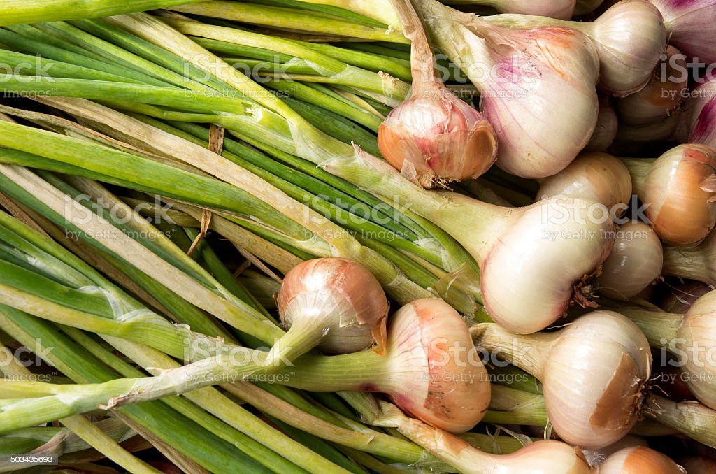 Onions are drying to dry. stock photo