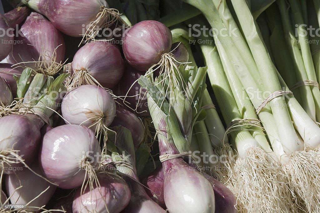 Onions royalty-free stock photo