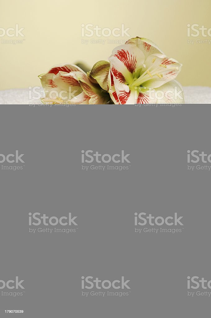Online Purchase? royalty-free stock photo