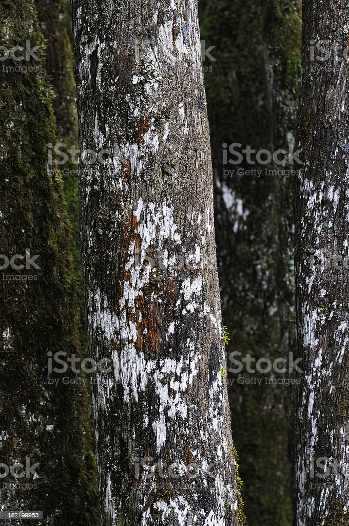 Only Trees royalty-free stock photo