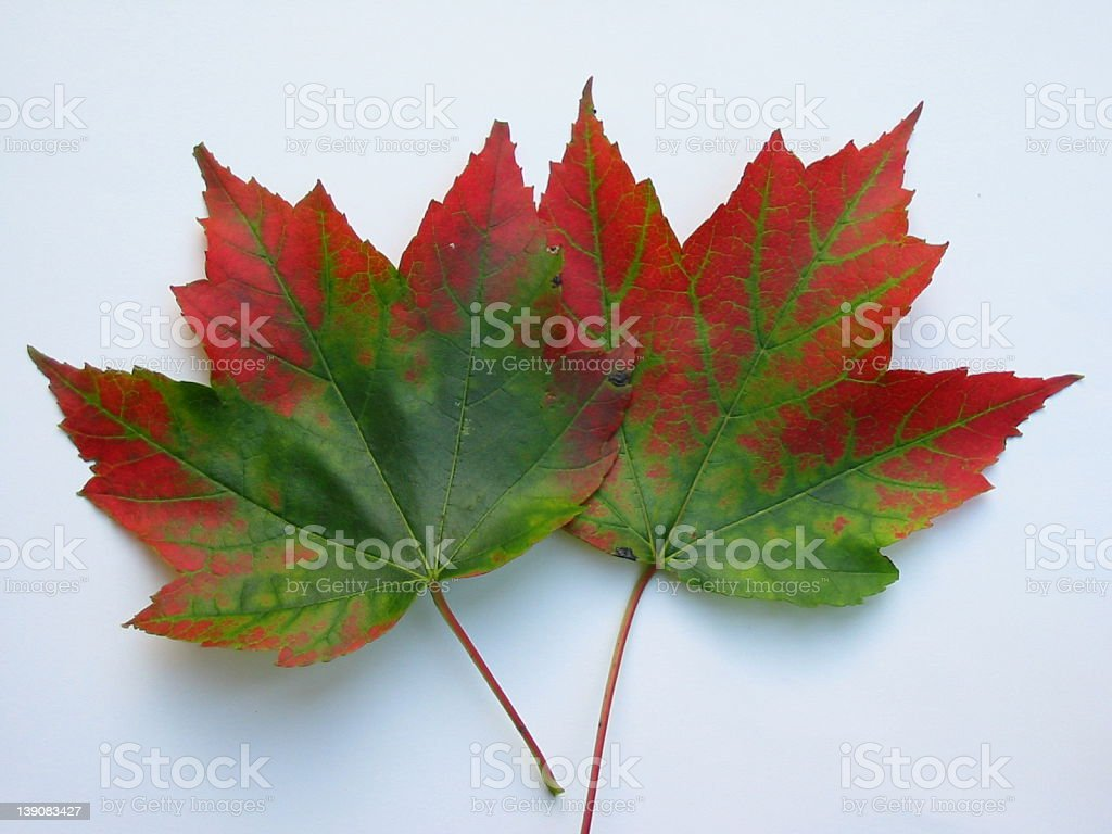 Onset of Autumn 2 royalty-free stock photo