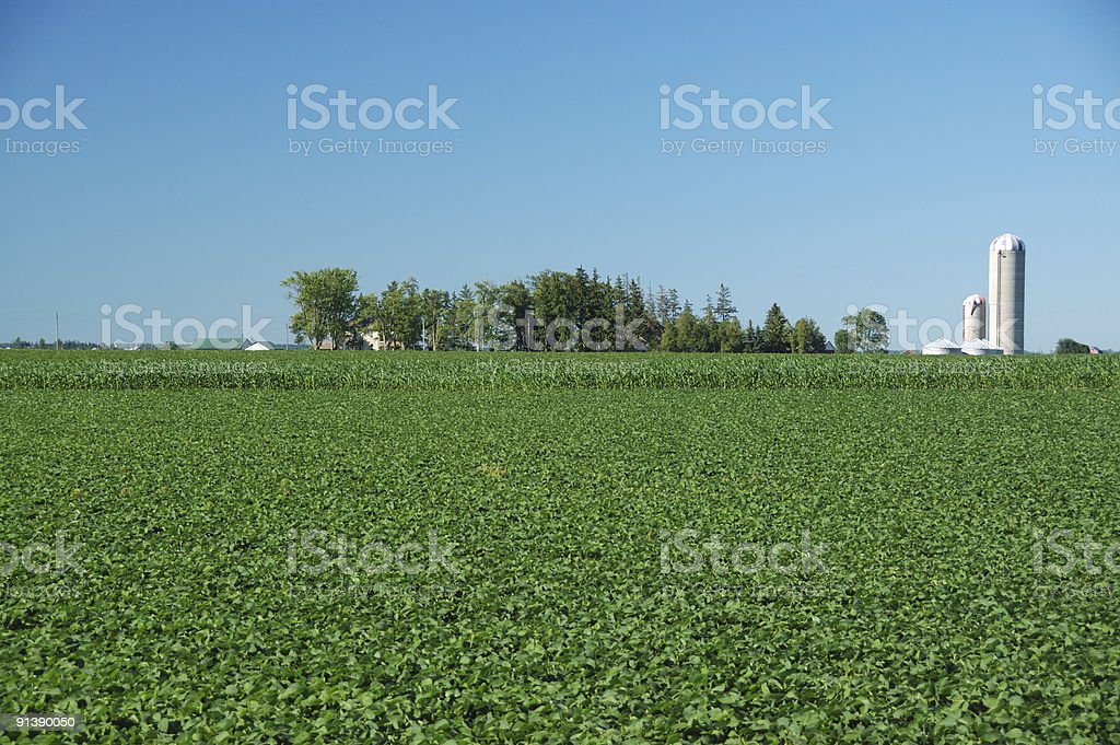 Ontario countryside scene with grain silo in background stock photo
