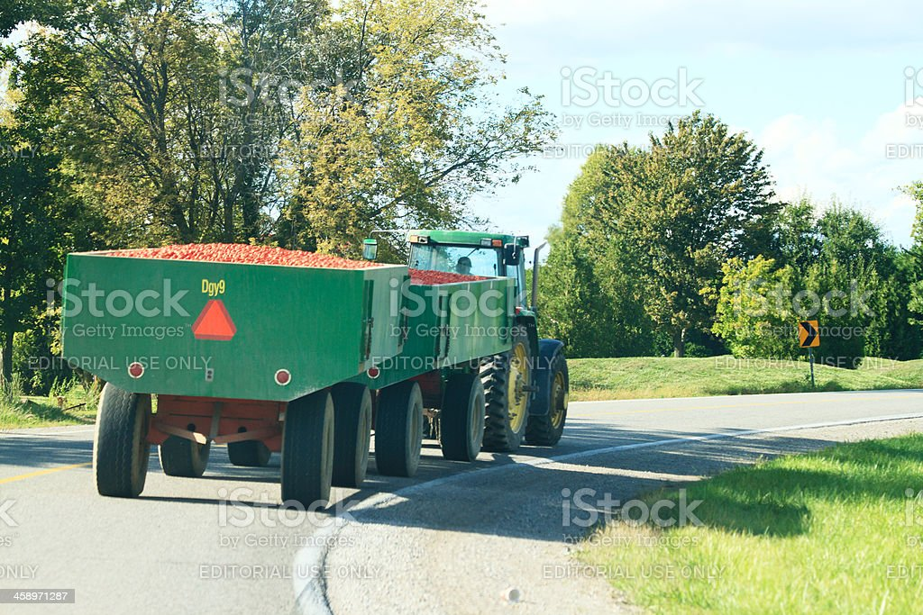 Ontario Farmer Hauling A Load Of Ripe Tomatoes stock photo