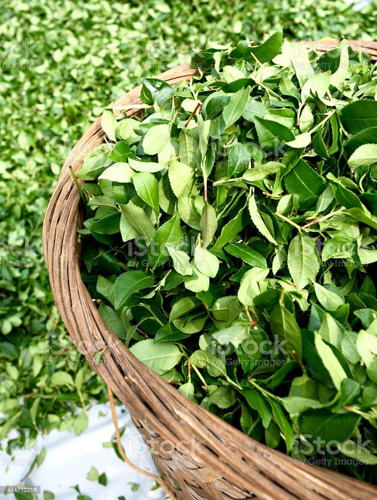 Oolong Tea Leaves stock photo