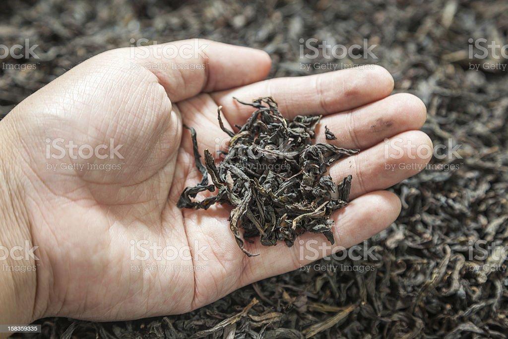 oolong tea royalty-free stock photo