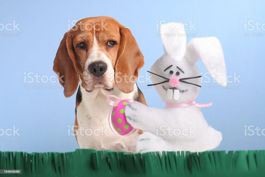 Oops!  Who let the dog out? stock photo