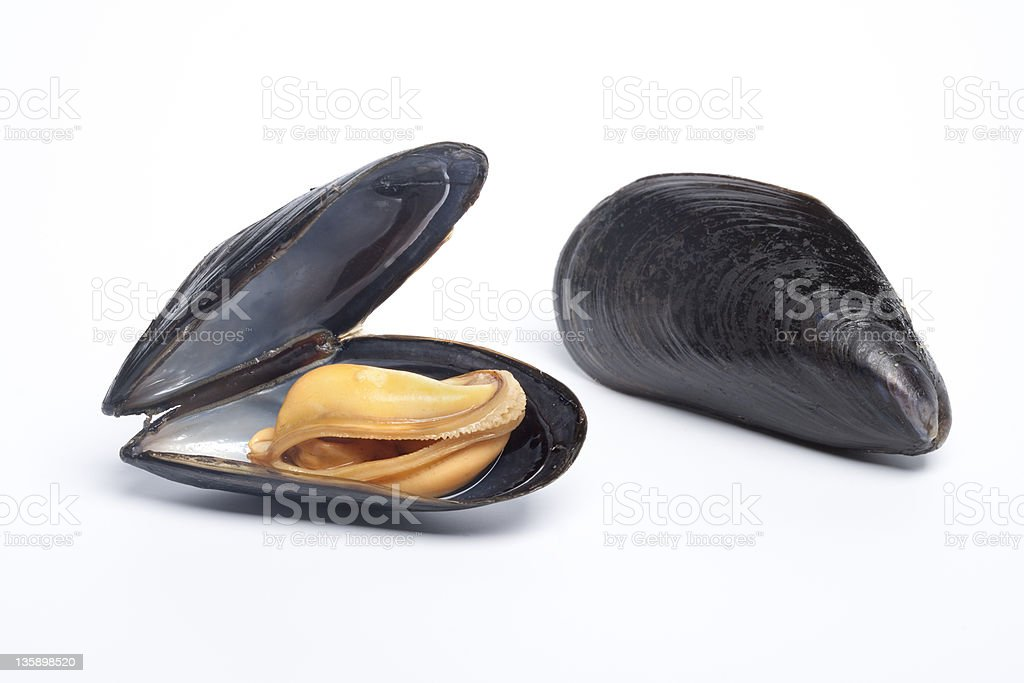 Open and closed mussel stock photo