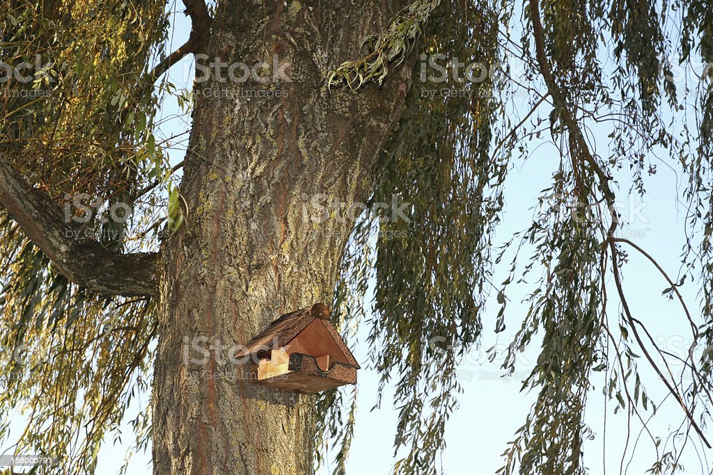 Open birdhouse on a weeping willow royalty-free stock photo