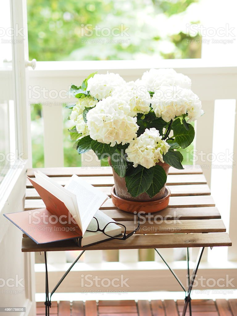 Open book and glasses on table next to flower pot stock photo