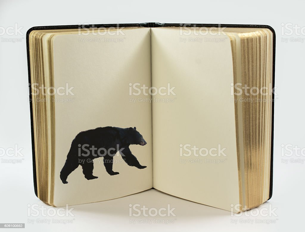 Open book with one page with black bear, copy space stock photo