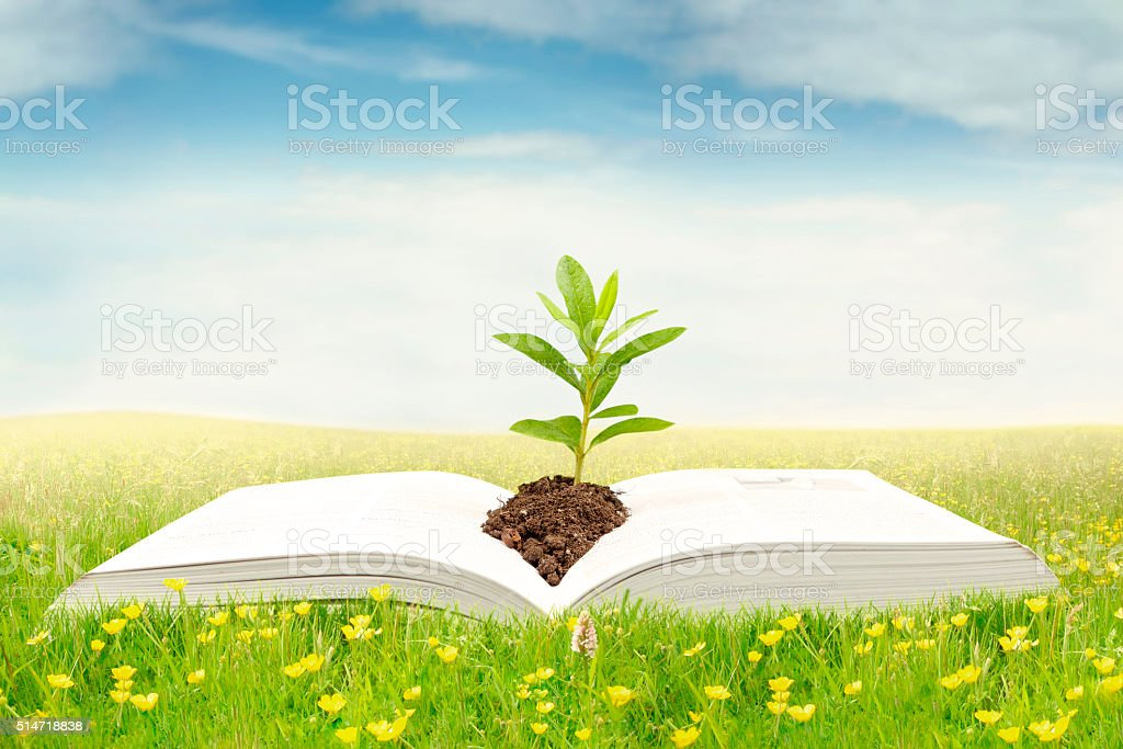 Open book with plant on meadow stock photo