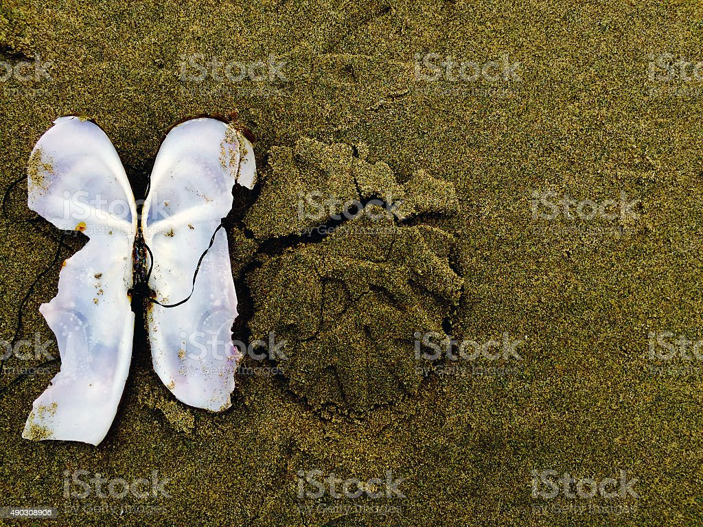 Open clam on beach background royalty-free stock photo