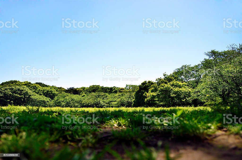 Open field at Yoyogi Park, Tokyo, Japan stock photo