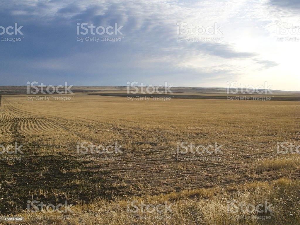 Open field in the fall royalty-free stock photo