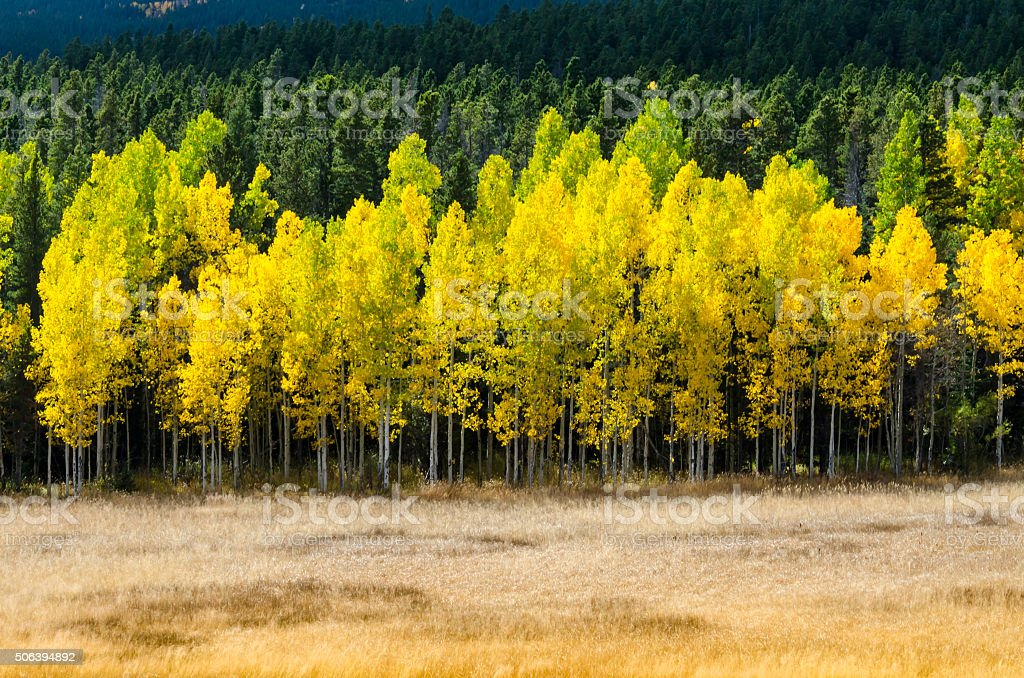 Open Field with Layers of Aspen Color stock photo